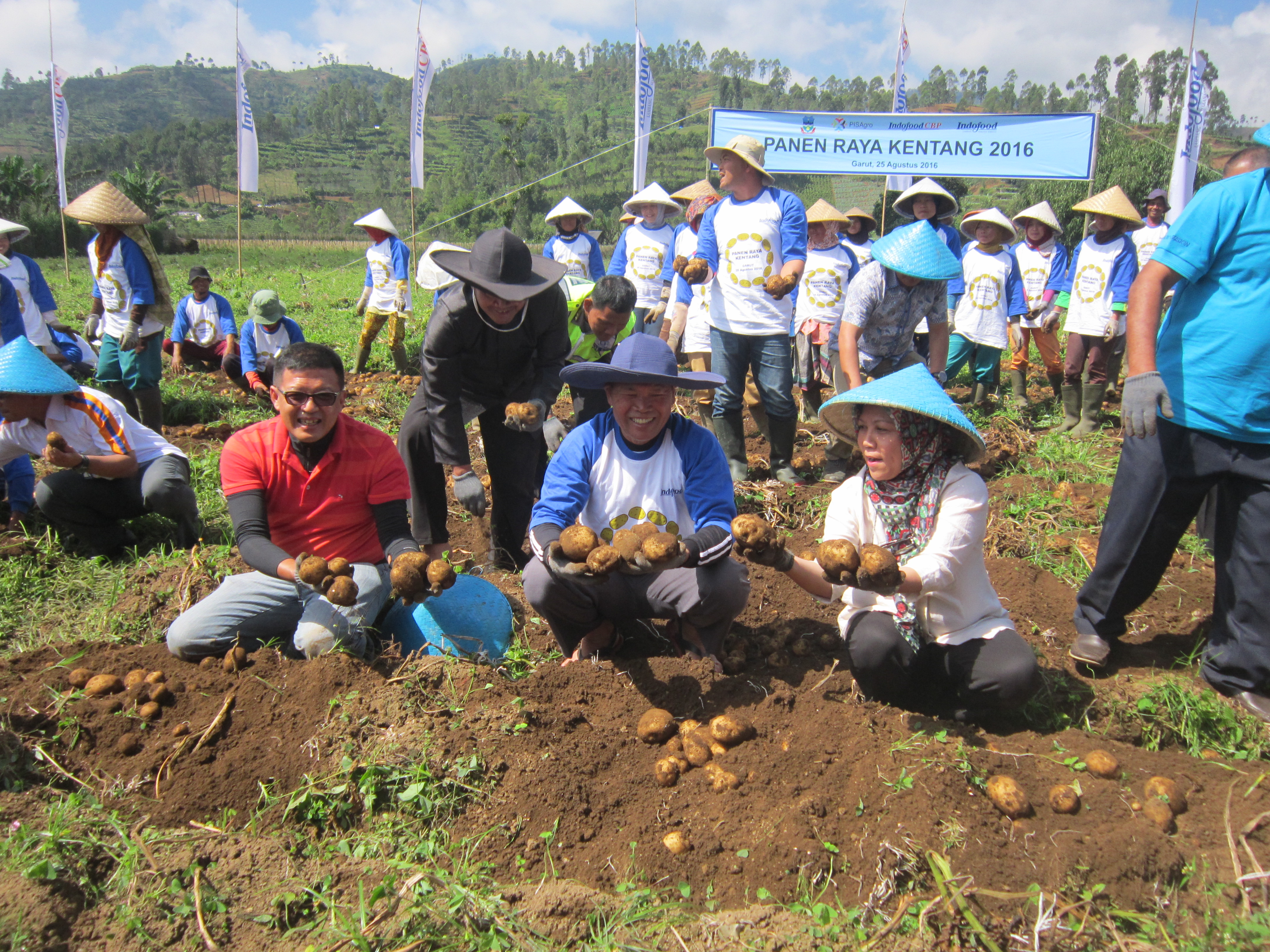Indofood and Its Trained Farmers Harvest Atlantic Potato in Garut