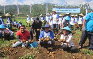 Indofood Celebrates Potato Harvest in Garut