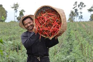 PISAgro Welcomes Back East West Seed Indonesia as Member